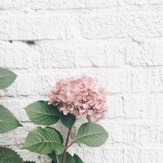 Nothing But Flowers, My Flower, Pretty Flowers, Floral Bouquets, Floral Flowers, Flower Vases, Pink Hydrangea, Spring Blossom, Favim