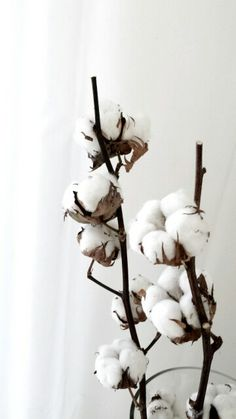 Cotton is so beautiful, and we are so lucky that we have so much in Arizona! #flowersbyrenee