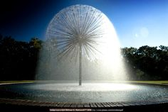 the Dandelion fountain on Allen Pkwy, Houston . I've always loved this fountain! Water Element, Texas Homes, Texas Travel, Stars At Night, Galveston, Houston Tx, Public Art, Amazing Photography, Places To See