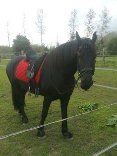Mijn hobby is paardrijden. Ik ben dan ook de trotste eigenaar van twee super paarden