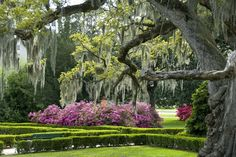 Take a scenic stroll around Baton Rouge at the Capitol Gardens, University Lakes or one