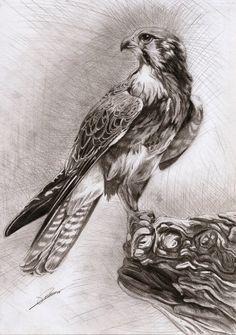 Falcon by ~AmBr0 on deviantART