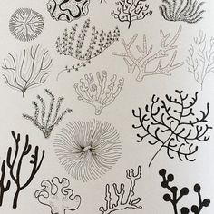 It's World Ocean Day today - more valid than things like World Toast Day! Ocean Drawing, Painting & Drawing, Zen Doodle, Doodle Art, Doodle Drawings, Drawing Sketches, Ocean Tattoos, Ocean Day, Arte Floral