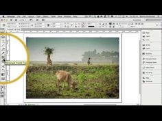 How to Create Multiple Frames with One Image in Adobe InDesign