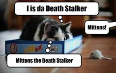 My Name Strikes Fear Into Evil Hearts!...Tabby...lol