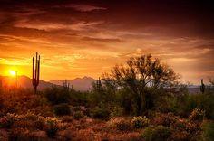 Sunset Photograph - Desert Gold  by Saija  Lehtonen