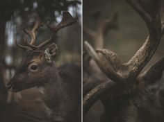 ldnsyndrome: Horns by daylessday on Flickr.