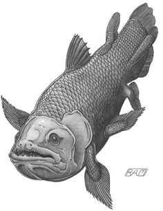 Coelacanth, illiterate fathead and long-lost relative