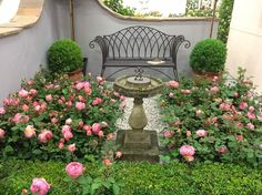 Design ideas for your Rose Garden: Roses work wonderfully with traditional parterres and topiary to create a formal garden setting. Rose Garden Design, Garden Design Plans, Diy Design, Design Ideas, Designs, Corner Plant, Fragrant Roses, David Austin Roses, House Landscape