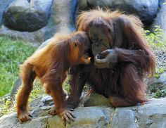 Lovely Photos of Mother and Baby Animals - Sortrature Mother And Baby Animals, Cute Baby Animals, Funny Animals, Animal Pictures, Cute Pictures, Tribute To Mom, List Of Animals, Animal Magic, Best Mother