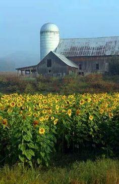 Beautiful barn and field.