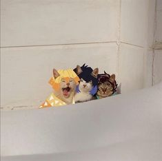 Anime Meme, Otaku Anime, Funny Anime Pics, Days Manga, Slayer Meme, Cat Icon, Dragon Slayer, Animes Wallpapers, Aesthetic Anime