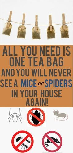 One Tea Bag And You Will Never See A Mice Or Spiders In Your House Again! (Works great) - PowerfulRemedy Mice and spider infestations are problems that are bothering thousands of households around the globe. A huge number of homeowners House Cleaning Tips, Cleaning Hacks, Get Rid Of Spiders, Keep Spiders Away, Keep Mice Away, Getting Rid Of Mice, Used Tea Bags, Uses For Tea Bags, Ideias Diy