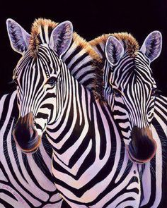 """Does having such a dramatic pattern make Zebras at greater risk for predators?    Biologists say their stripes are actually a form of  camouflage. called """"motion dazzle"""".   When a herd moves together, the stripes have the effect of blurring the boundaries between individuals so they appear to be one large animal running.  This may confuse the predator & make it more difficult to pick out a single animal to attack, improving the Zebras' chance of survival."""