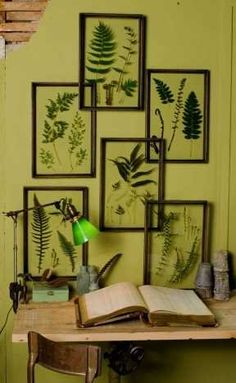 Drifting Fern Display