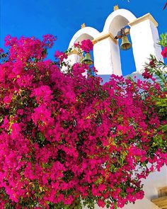 Paros Island, Garden Of Earthly Delights, Greek Culture, Greece Islands, Stunning View, Beautiful, Bougainvillea, Ancient Greece, House Colors
