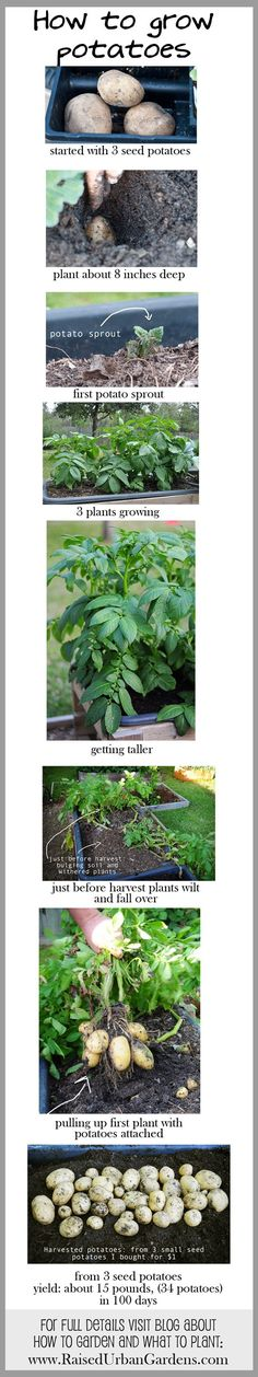 The journey of planting a potato. link has info on how to garden and what to plant with lots of pictures.  Garden with your kids - they will love it!