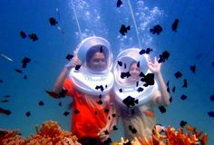 Popular sightseeing tours, activities, day trips and things to do in Havelock Andaman is Sea Walk and Snorkeling Underwater Animals, Underwater World, Sea Walk, Honeymoon Special, Havelock Island, Andaman And Nicobar Islands, Water Pictures, Fish Swimming, Adventure Activities