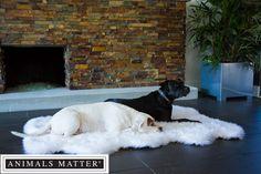 Animals Matter® Orthopedic Faux Fur Shag Rug.