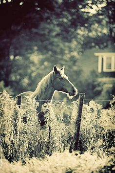 "Photographer: Katya Horner  ""Horse [Of Course]"