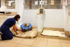 Dog beach for recovery - Coral Springs Animal Hospital in Coral Springs, Fla. - 2012 Veterinary Economics Hospital of the Year