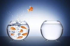 Photo about Fish bowl jump escape cocept. Image of fish, cohesion, loner - 38148901