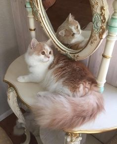 22 Cats - Animals Filled With Happiness To Brighten Your Day Animals And Pets, Baby Animals, Funny Animals, Cute Animals, Funny Cats, Pretty Cats, Beautiful Cats, Gatos Cool, Photo Chat