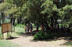 Sunday Hike with Ranger Dave Julian, California  #Kids #Events