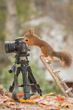 """Artista faz """"magia"""" com fotos encantadoras dos esquilos que passeiam no seu quintal"""