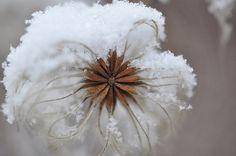 Winter Flower . Marie Grady Palcic Photograph Etsy