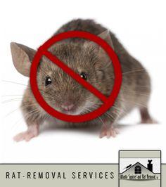 http://www.kudzu.com/m/Atlanta-Squirrel-and-Rat-RemovalLLC-13286633