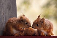 Squirrels - Ketil Valle 500px