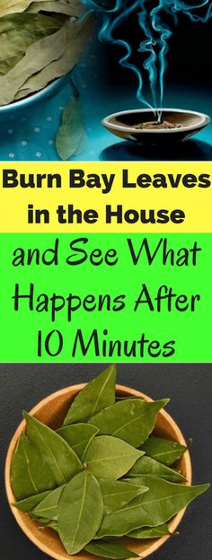 Burn Bay Leaves in the House and See What Happens After 10 Minutes - seeking habit