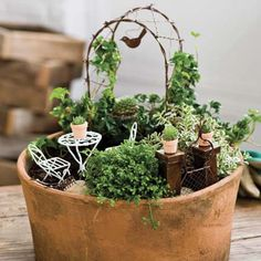 Old pot, new use! Miniature container gardening at its best.