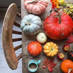 Project Table, Fall Season, Take My, Love, Creative, Pumpkins, Instagram, Couple, Autumn