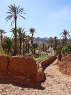 Road in the oasis in Draa valley, Morocco (by daniel.virella).