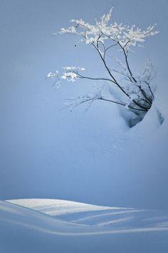 I love beautiful Nature photo I Love Snow, I Love Winter, Winter Snow, Winter Christmas, Winter Blue, Winter Light, Behind Blue Eyes, Winter Magic, Winter's Tale