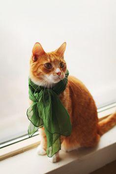 Orange kitty. Green scarf. SWEETNESS.