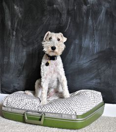 It's pretty clear that Ike is a deprived dog. So deprived that he just now, at almost 7 years of age, got a dog bed. Of course, Ike couldn't have just any dog bed. He needed a re-purposed suitcase dog bed. Diy Bett, Diy Tumblr, Diy Dog Bed, Wire Fox Terrier, Vintage Suitcases, Animal Projects, Pet Beds, Diy Stuffed Animals, Fur Babies