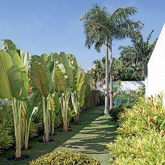 Sol - Se o seu jardim recebe muita luz direta, escolha plantas de pleno sol, como beri, petúnia, alpínia (foto), camarão-amarelo, capim-do-texas, moreia, murta, hortênsia, azaleia, hibisco, fórmio, gardênia, suculentas, cactos, agapanto, clúsia, estrelítzia e camélia.