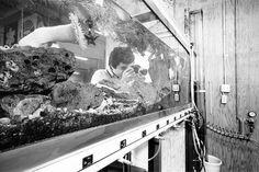 Curator Picks: #Eames Tanks   Barbican Blog @barbicancentre #worldofcharlesandrayeames