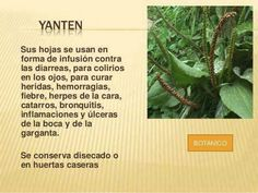 Yanten