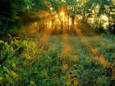 Sunrise beauty