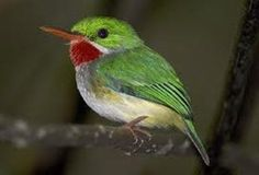 Birding In Jamaica | Attractions Link Tourism Services