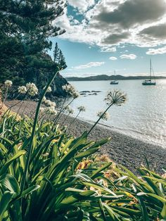 7 Best Free Day Trips From Auckland New Zealand - Ruhls of the Road New Zealand Beach, Visit New Zealand, Auckland New Zealand, New Zealand Travel, Australia Travel, Queensland Australia, Western Australia, Ocean Photography, Sydney Photography