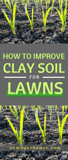 How to Improve Clay Soil for Lawns You can still improve the soil to help your grass get the nutrient it needs for deep root establishment and optimal growth. We hope that our guide helped you changing your clay soil for the better. Landscaping Supplies, Backyard Landscaping, Landscaping Ideas, Landscaping Software, Landscaping Company, Backyard Patio, Garden Soil, Lawn And Garden, Garden Path