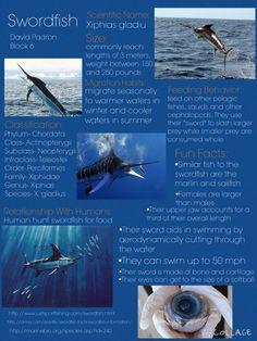 The mighty swordfish!