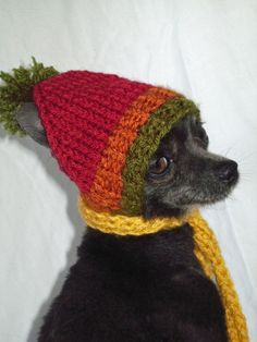 fe1bded2037 Tri color Hand knit Dog hat too cute :) Knit Dog Sweater, Dog Sweaters