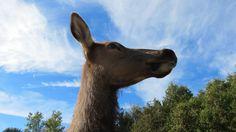 QC - Hemmingford - Parc Safari - 2 of 25 - Safari Aventure - Part. 2