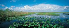 Tangled mangrove forests and jungle-like tropical hardwood hammocks. Welcome to Everglades National Park.